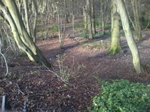 Coldfall Wood. Cold January 2014